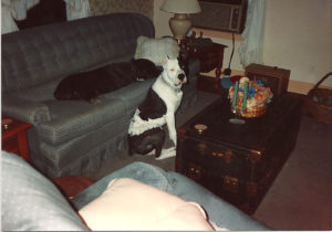 Donna-Velez-2-dogs