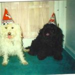 Sammy-and-Bernie_09